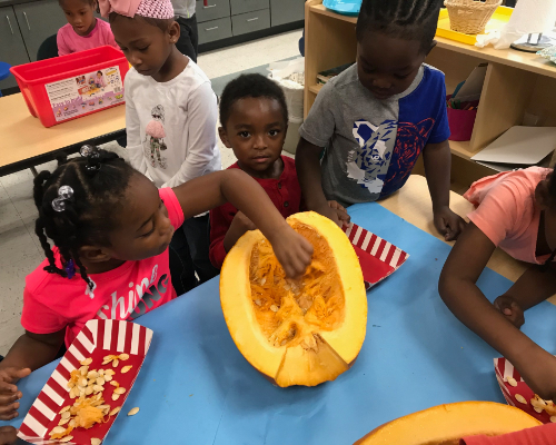 Pumpkin Exploration in Mrs. Angela and Ms. Jenny's Class